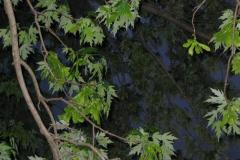 IMG_1456 Leaves