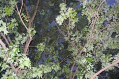 IMG_1457 Leaves