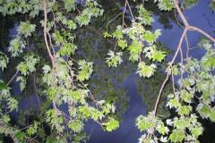 IMG_1458 Leaves