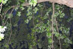 IMG_1459 Leaves
