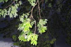 IMG_1460 Leaves