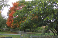 IMG_1728 Trees