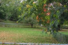IMG_1731 Trees