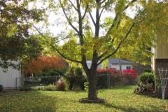 IMG_1740 Tree