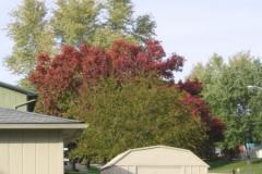 IMG_1741 Treetop