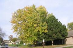 IMG_1747 Big Tree!