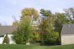 IMG_1749 Trees