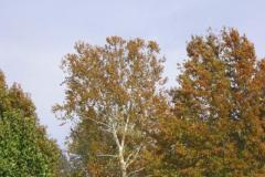 IMG_1752 Trees
