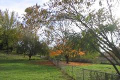 IMG_1767 Back Yard